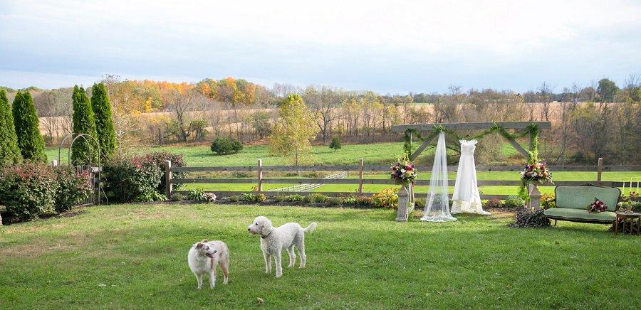 Farm animals at a wedding